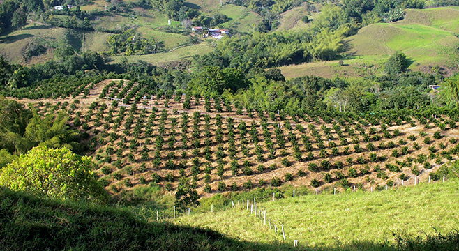 Pueblos cafeteros de Antioquia